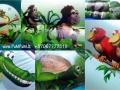 JungleMaxi7
